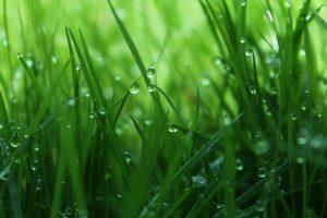 trawa na podjeździe
