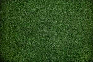 Zielono nie tylko za ogrodzeniem