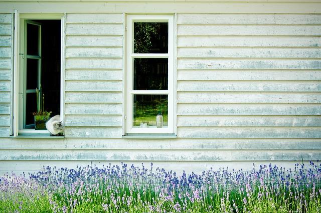 Z jakich gatunków drewna polscy producenci wykonują dziś okna i drzwi?