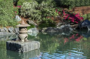 Japońskie piękno bez ogródek